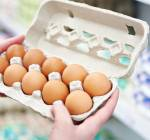 Buy Eggs From Anywhere? Not So Fast!