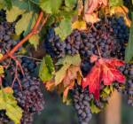 Understanding Bordeaux Wine – Part I: The Secrets of Pomerol