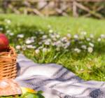 How to Set Up the Perfect Picnic