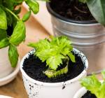 You Can Magically Regrow Vegetables from Kitchen Scraps