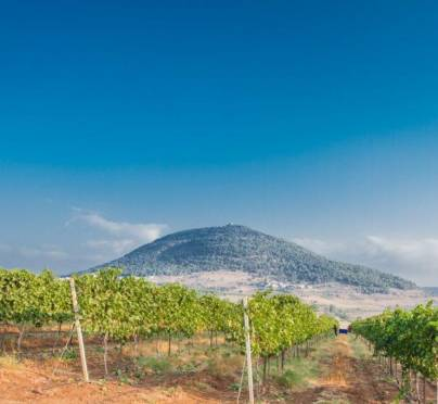 Netofa – the Essence of the Lower Galilee Terroir