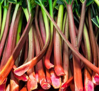 A Rhubarb Revival- All About Cooking with Rhubarb