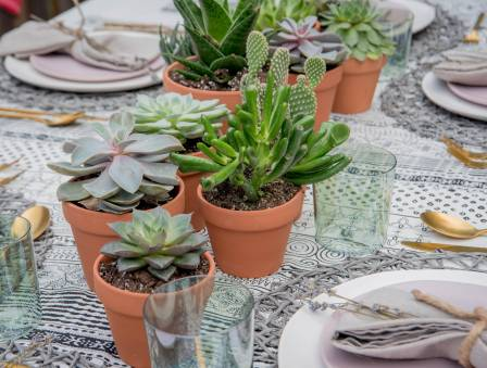 How to Use Humble Succulents as Your Sukkah Centerpiece